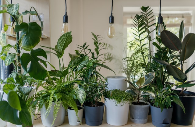 Top 5 Plants That Purify the Air in Your House
