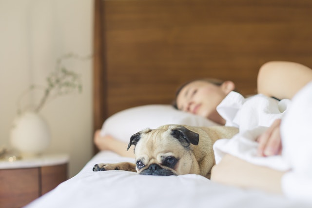 Do Some Types of Light Help You Sleep Better?